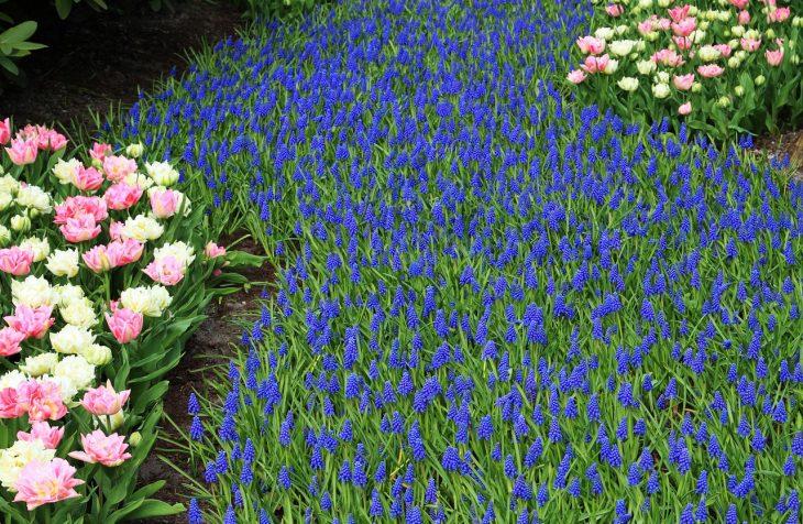 zahradník