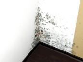 Hromadění vlhkosti  v bytě způsobuje vznik plísní, zdroj: shutterstock.com