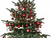 Návrat k živým vánočním stromkům, zdroj: sxc.hu